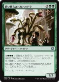 【JPN】飼い馴らされたハイドラ/Domesticated Hydra[MTG_CN2_063U]