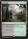 【JPN】森林の墓地/Woodland Cemetery[MTG_DOM_248R]