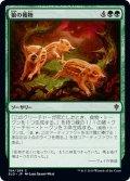 【JPN】狼の獲物/Wolf's Quarry[MTG_ELD_184C]