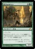 【JPN】巨大オサムシ/Giant Adephage[MTG_GTC_121M]