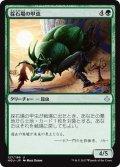 【JPN】採石場の甲虫/Quarry Beetle[HOU_127U]
