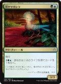 【JPN】川ヤツガシラ/River Hoopoe[HOU_143U]