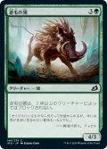 【JPN】逆毛の猪/Bristling Boar[MTG_IKO_146C]