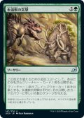 【JPN】永遠獣の突撃/Charge of the Forever-Beast[MTG_IKO_147U]