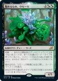 【JPN】集めるもの、ウモーリ/Umori, the Collector[MTG_IKO_231R]