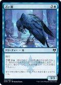 【JPN】占い鴉/Augury Raven[MTG_KHM_044C]