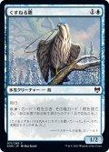 【JPN】くすねる鷹/Pilfering Hawk[MTG_KHM_071C]
