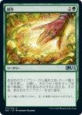 【JPN】耕作/Cultivate[MTG_M21_177U]