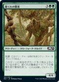 【JPN】節くれの賢者/Gnarled Sage[MTG_M21_187C]