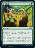 【JPN】地の変幻/Terramorph[MTG_MH2_177U]