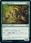 【JPN】レンの地のハイドラ/Wren's Run Hydra[MTG_MH2_183U]