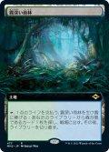 【JPN】霧深い雨林/Misty Rainforest[MTG_MH2_477R]
