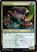 【JPN】ヒレバサミダコ/Sharktocrab[MTG_RNA_206U]