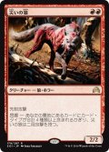 【JPN】災いの狼/Scourge Wolf[MTG_SOI_179R]