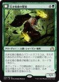 【JPN】古き知恵の賢者/Sage of Ancient Lore[MTG_SOI_225R]
