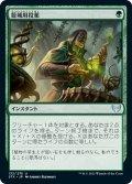 【JPN】籠城用投薬/Fortifying Draught[MTG_STX_132U]