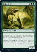【JPN】放漫トカゲ/Imperiosaur[MTG_TSR_211U]