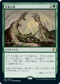 【JPN】生命と枝/Life and Limb[MTG_TSR_215R]