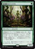 【JPN】老樹林のドライアド/Old-Growth Dryads[XLN_199R]