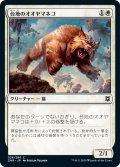 【JPN】台地のオオヤマネコ/Mesa Lynx[MTG_ZNR_028C]